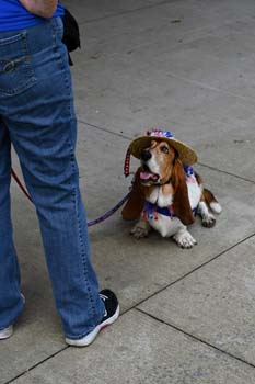 basset hound in costume